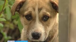 Волонтёры обратятся в полицию, чтобы найти живодёров, застреливших собак в Калининграде