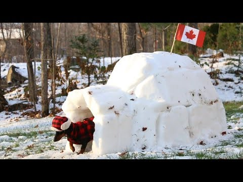 Crusoe Gets his BarkBox Delivered to his Igloo in Canada - (with Free Shipping!)