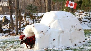 Crusoe Gets his BarkBox Delivered to his Igloo in Canada - (with Free Shipping!) thumbnail