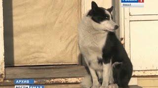Владельцев домашних животных на Ямале обяжут регистрировать своих питомцев