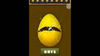 【パズドラ】(卵を叩け)詐欺発覚