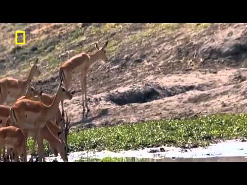 Animals Documentary - War for survival of wildlife in dry river