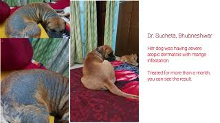 Benefits of Vet Consultation: Dog treatment in Hindi