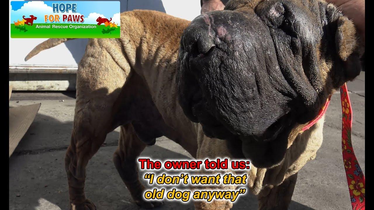 Wally S Dog Rescue Facebook