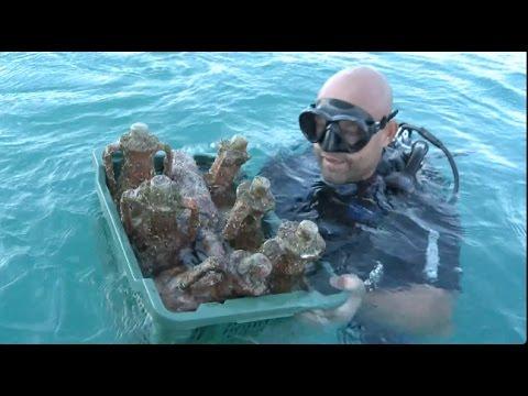 Underwater Cellars in Croatia Add Taste of Sea to Wine