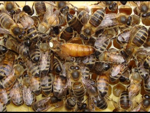 Видео О Пчеловодстве Для Начинающих.