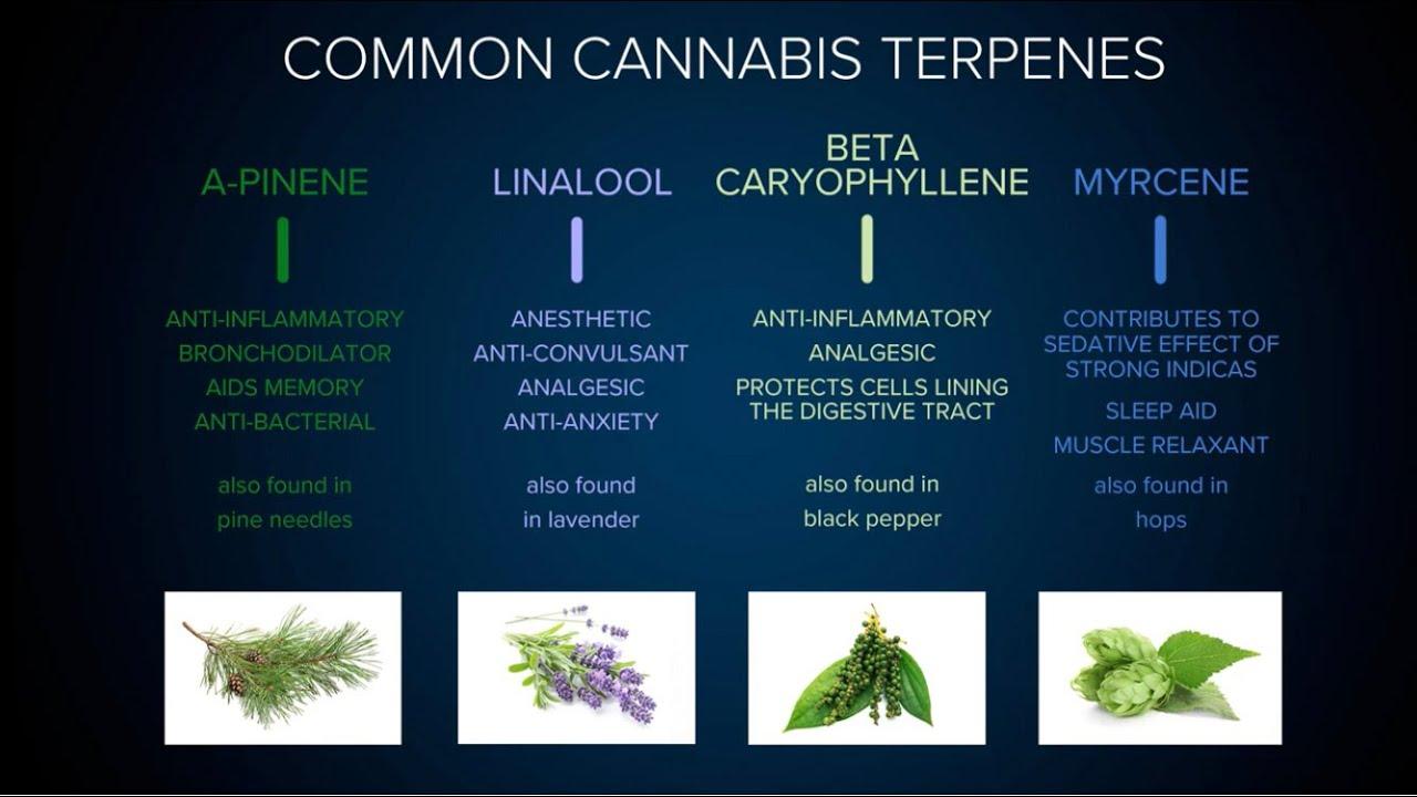 Understanding Cannabis Terpenes, Strains & the Entourage Effect: Martha Montemayor / Green Flower