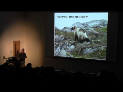 Upper Snake Region Wildlife Speaker Series Part #4 - Wolverines