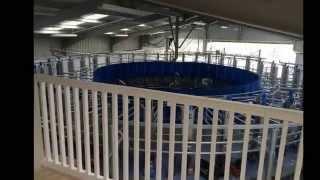 Ballindrum Dairy Farm: Dairymaster Rotary Parlour