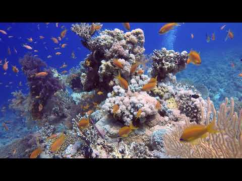 Diving And Snorkeling The Red Sea