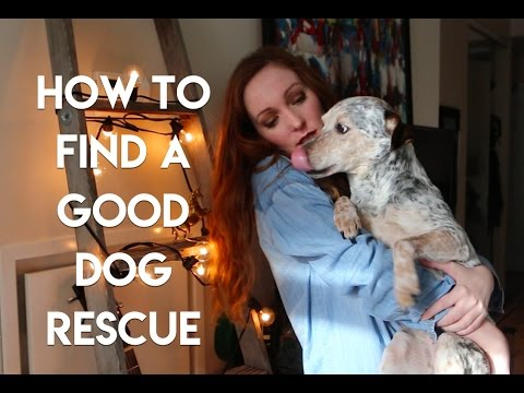 How To Find A Good Dog Rescue | Simone Nicole