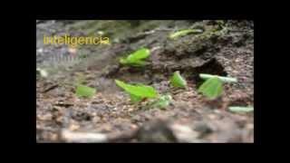Inteligencia Colectiva Analogía Colonia de Hormigas
