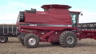 case ih 2388 combine soybean harvest