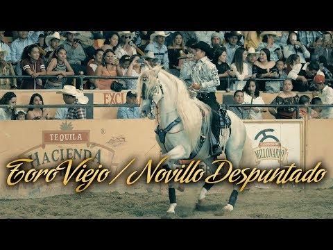 Beto Peña - Toro Viejo, Novillo Despuntado (En Vivo)
