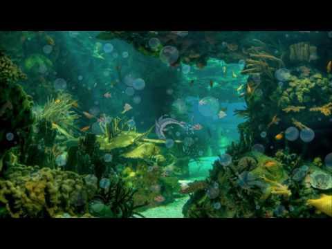 Покровкова Н  А рыбы в море плавают вот так