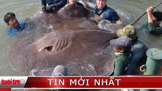 ⚡ Tin mới nhất | Bắt được cá đuối hơn 220kg