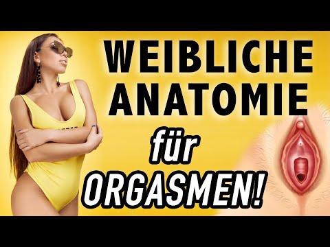 ▷ WEIBLICHES GESCHLECHTSORGAN: Für Orgasmen benötigtes Wissen! (G-Punkt, A-Punkt, U-Punkt, usw.)