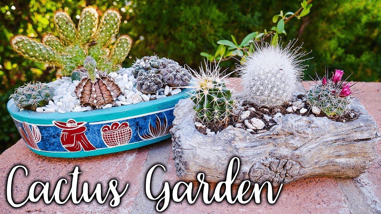 How To Make An Indoor Cactus Garden Joyusgarden Youtube