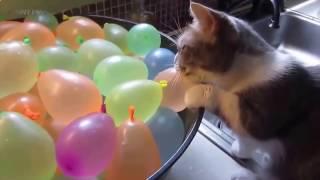 Приколы над кошками#13 | Видео приколы про котов 2017