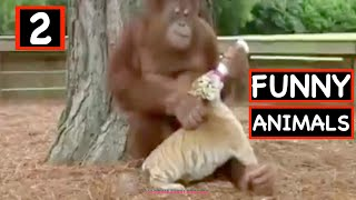 FUNNY ANIMALS JUNE 2020 Episode -2- | ULTIMATE FUNNY EN FAILS