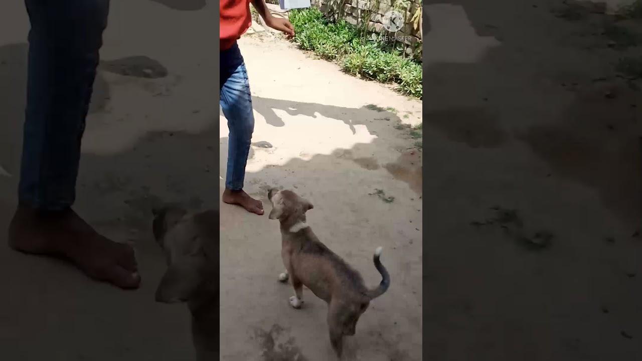 Download Dog information video tk paswan