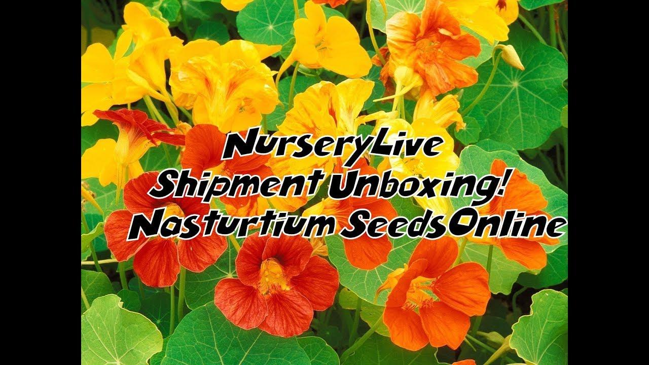 NurseryLive Shipment Unboxing! || Nasturtium Seeds|| Buying Seeds Online in  India