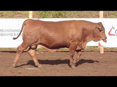 LOTE 04   LW   0081