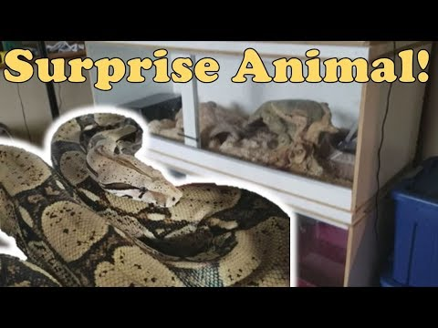 Reptile Room Tour !! Part 2 (the BIG stuff)