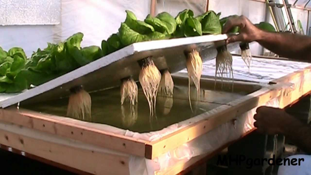 Homemade hydroponic growing systems for Hydroponic grow bed