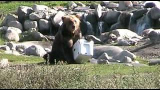 YETI Coolers - Bear vs. YETI