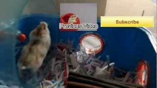 How to stop hamsters from fighting