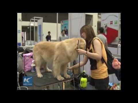 Thailand International Dog Show 2016 attracts hundreds of Chinese dog lovers