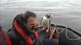 Un pingouin propose sa plus cordiale amitié à quelques humains.