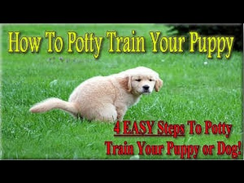 zak-george-how-to-potty-train-your-puppy-easily!-everything-you-need-to-know!---zak-george