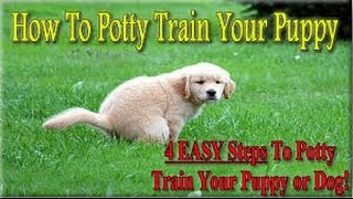 Zak George-How to Potty Train your Puppy EASILY! Everything you need to know! - Zak George