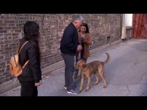 Vuelve el encantador de perros a NatGeo