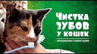 ЧИСТКА ЗУБОВ у кошек