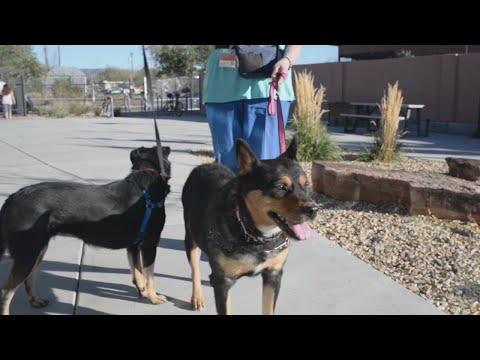ABQ Animal Welfare Hosts Black Friday Adoption Event