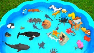 Learn Sea Animal and Wild Zoo Animals Names Video Animal Toys For Kids