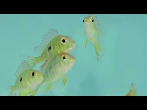 See Aquarium Stores Hatfield PA 267-263-2027 Aquarium Stores Hatfield PA