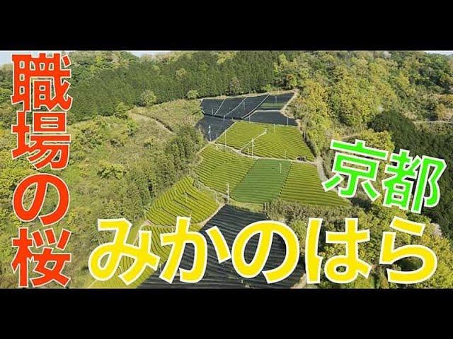 【みかのはら/京都/179】「職場は山桜にかこまれて」空撮・たごてるよし_Aerial_TAGO channel