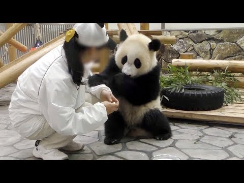 【子パンダ】🐼結浜のミルクタイム❤【ノーカット♪】 Giant Panda -Yuihin-☆Milk Time♪