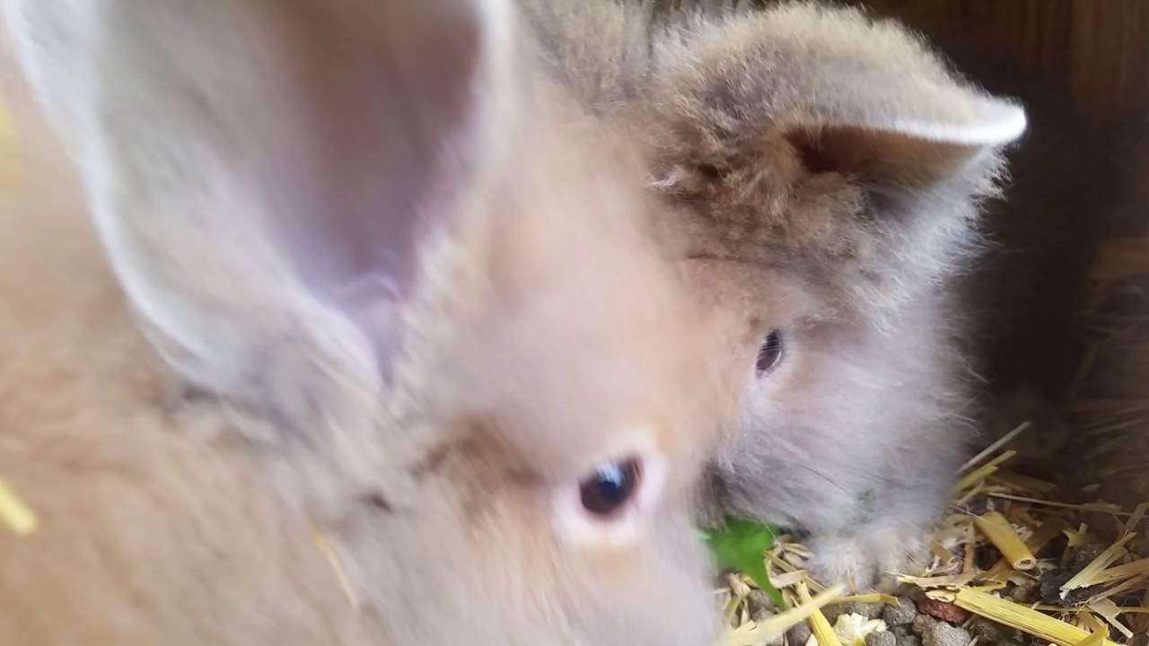cutest teddy bear rabbit ever youtube