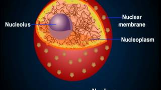 Structure of Cell Nucleus