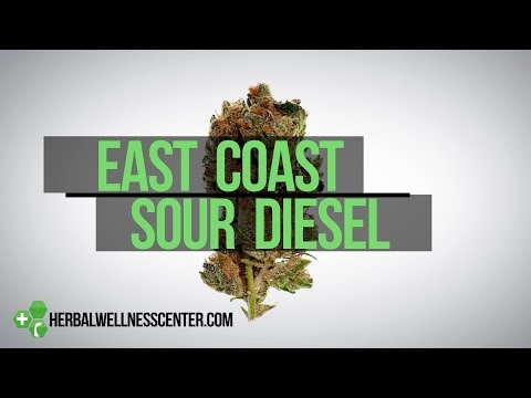 East Coast Sour Diesel strain review