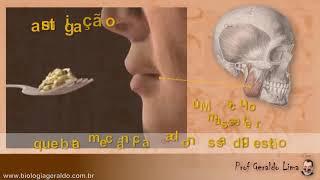 Digestão 1 - Boca