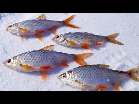 зимняя рыбалка на плотву - 2017-12-26 13:50:13