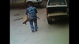 Последние минуты жизни собаки, уничтоженной службой по отлову в Волжском попали на видео