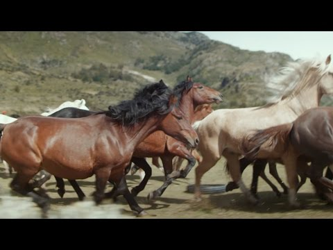 Wild horses round-up - Patagonia: Earth's Secret Paradise - Episode 1 Preview - BBC Two