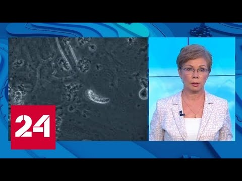 Тайно госпитализирован: Шумахера хотят вылечить стволовыми клетками - Россия 24